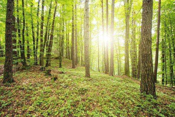 Comunicazione ambientale | Luca Masotto